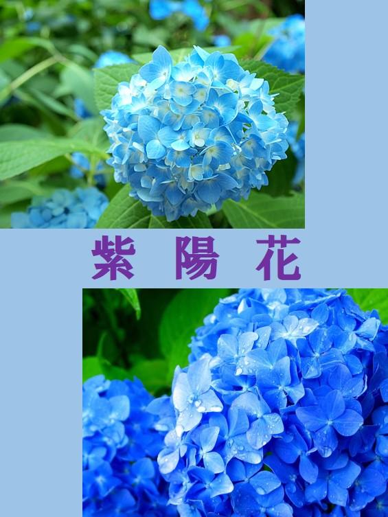 ushida2.JPG.JPG